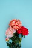 Blue Flores Flowers Pinup Favim.Com 2019349